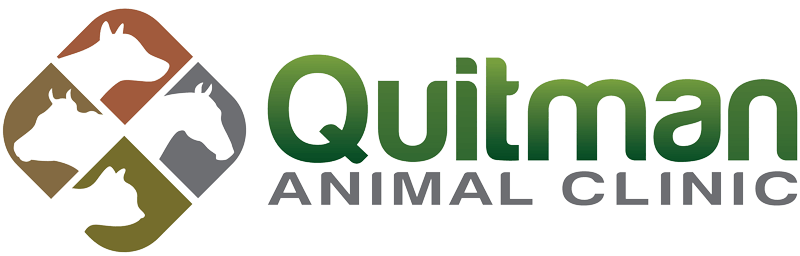 quitman animal clinic